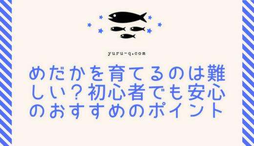メダカを育てるのは難しい?熱帯魚と比べた難易度は?初心者が育ててみた!